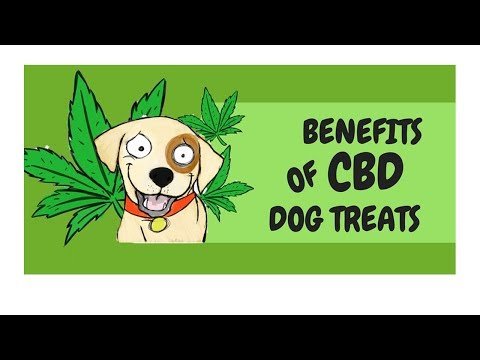 hemp-oil-for-dogs