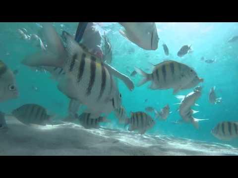 THINGS TO DO: Coki Beach, St. Thomas U.S. Virgin Islands   HD