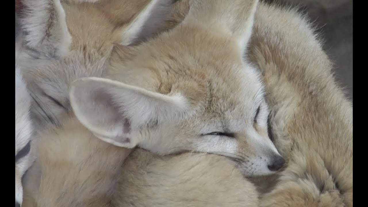 Extremely Cute Gregarious Animals Huddle Together To Keep Warm At