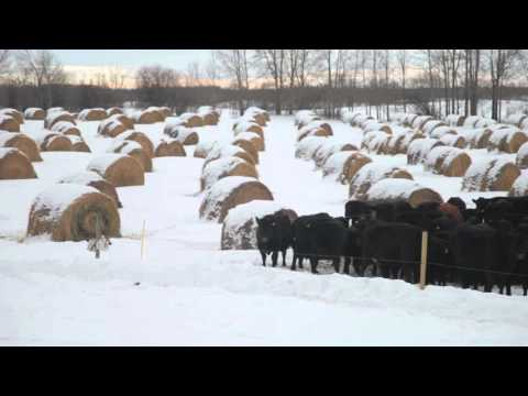 Winter Grazing Systems: Grounding Fencing Systems