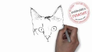 Как нарисовать морду кота