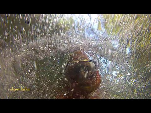 Swimming Upstream Costa Cetacea Media