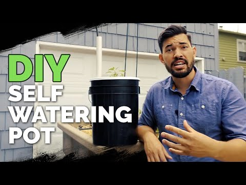 download How to Build a Self Watering Pot For $10 😱