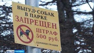 Стандарты по содержанию и выгулу домашних животных могут появиться на Колыме