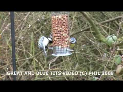 Uk GARDEN BIRDS THE GREAT TIT AND THE BLUE TIT