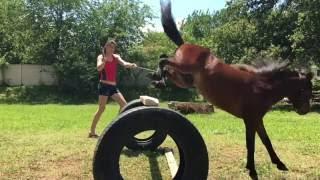 Insta Edits || 1year of jumping || Miniature Horse Record Jump