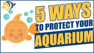 5 Ways to Protect Your Aquarium (and Family) from Contamination