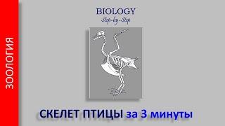 Скелет птицы за 3 минуты