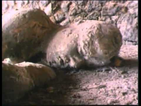 Perished nations 1 (Harun Yahya) - YouTube