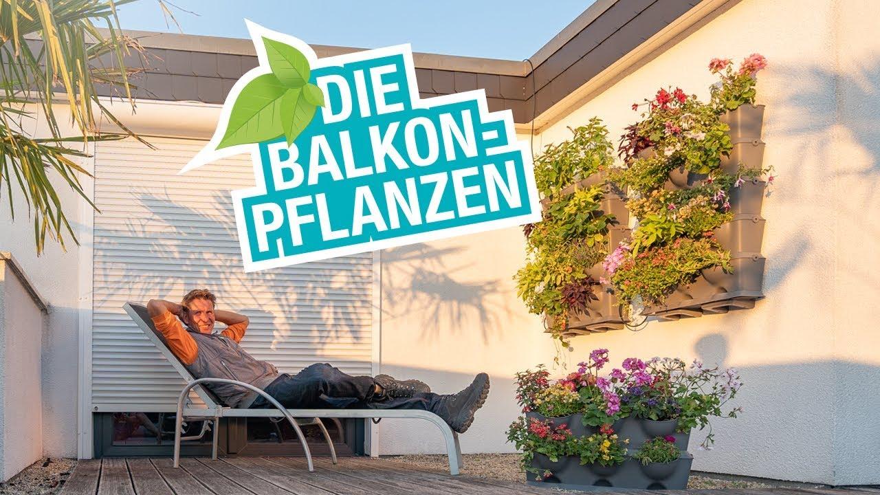 Die Balkonpflanzen Tipps Und Tricks Zum Platz Sparen Bewassern Und