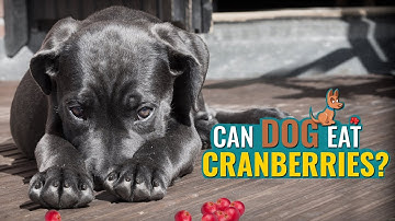 Can Dogs Eat Cranberries?   Petmoo