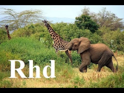Elephant, Giraffe, Hippo, Zebra, wilddog,  Africa (part 3) Okavango Nature 2018 Hd Documentary.
