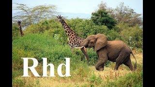 Elephant, Giraffe, Hippo, Zebra, wilddog,  Africa (part 3) Okavango Nature 2018 Hd Documentary.