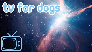 Videos for Bored Dogs to Watch! Entertain Your Bored Dog or Puppy!