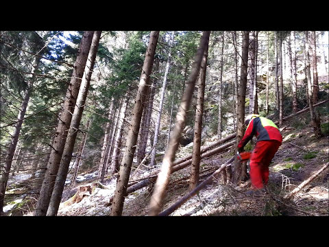 Awesome Tree Felling Strategy For Dense Forest Stands - Forestry And Logging Hack - Forestry Extreme