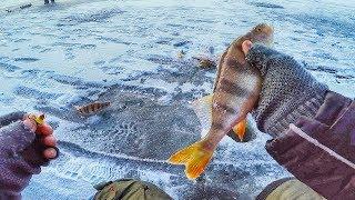 видео Ловля окуня зимой