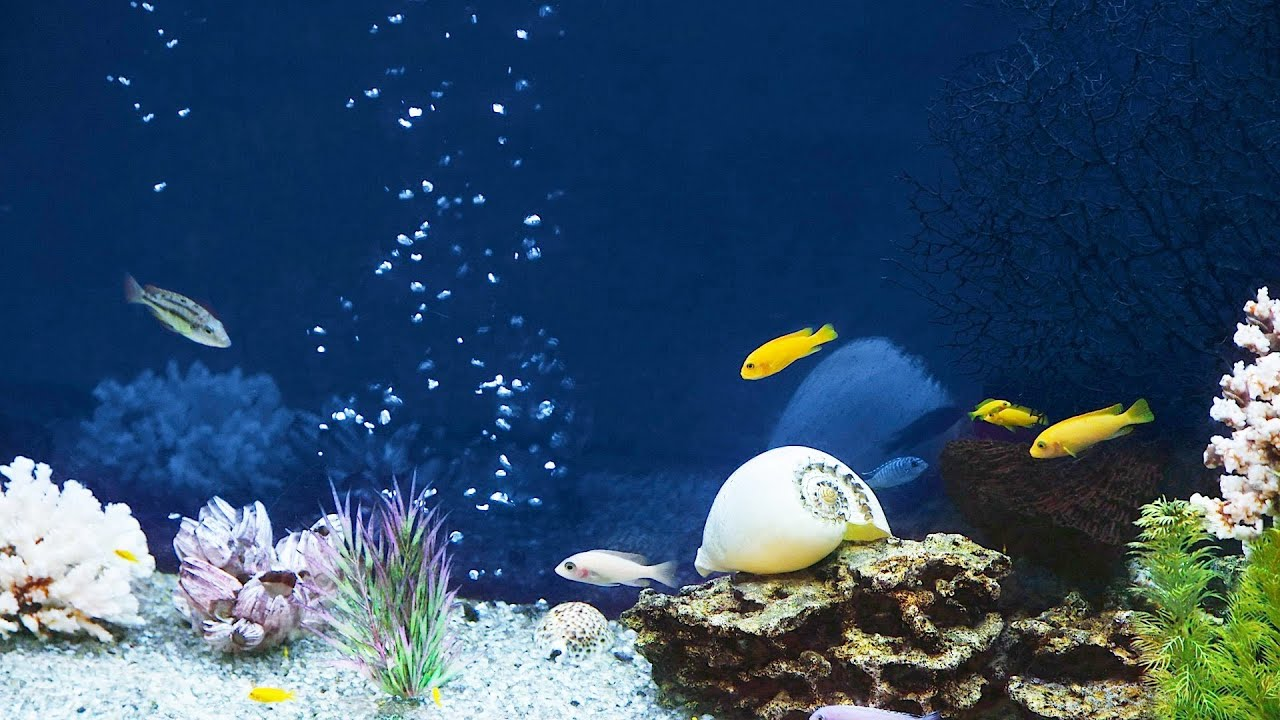 Is tap water ok in saltwater fish tank aquarium care for Fish tank care