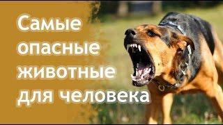 Самые опасные животные и смертоносные жители планеты