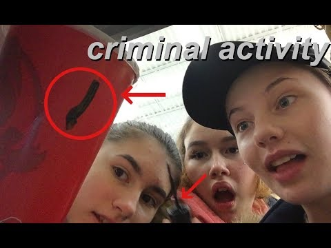 criminal activity (gone right)