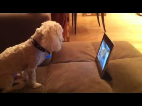 Dog Watching Anime YouTube
