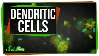 Dendritic Cells: Scishow Talk Show