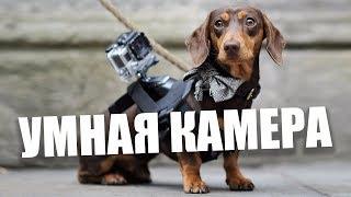 Умная домашняя камера Cherry ведет себя как... собака