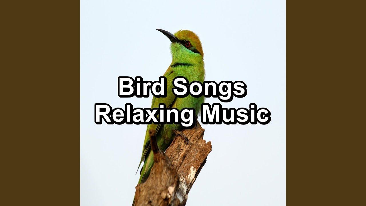 Bird Music Natural Sounds For Babies
