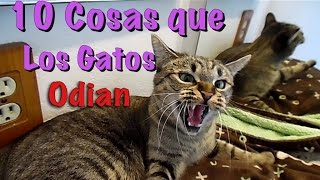 10 Cosas que Los Gatos Odian