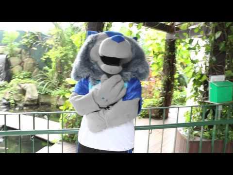 RI IHC Remix 2016 - MR Publicity Video