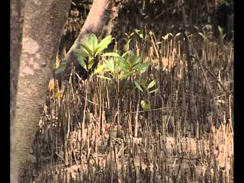 Hệ sinh thái rừng ngập mặn Cần Giờ [Part 1/3]