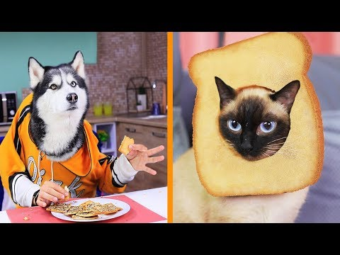 22 Funny Pet Pranks And Hacks