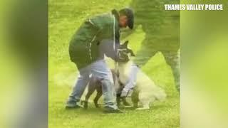 Convicted for violent dog abuse: Robert Black of Newbury, Berkshire, UK