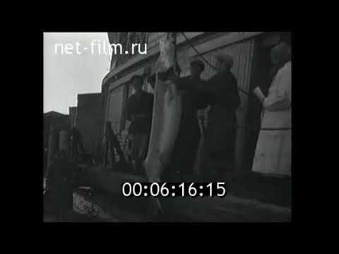 1962г. Лов рыбы