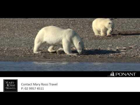 Ponant Arctic Polar Bears
