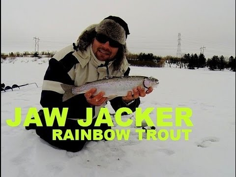 Best rainbow trout ice fishing tips with jaw jacker youtube for Ice fishing tips