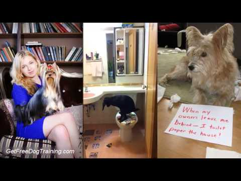 Toilet Training Your Puppy or Dog - How To Toilet Train a Puppy or Dog in 7 Days