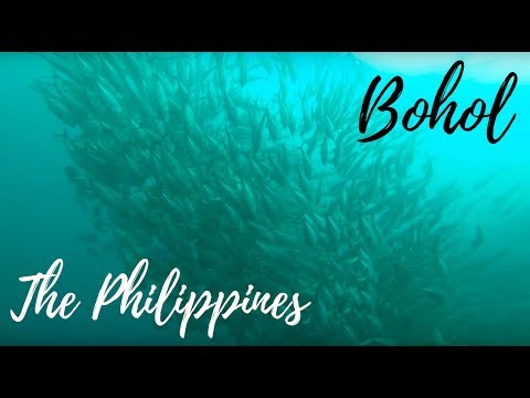 Philippines Bohol Dive & Travel HD