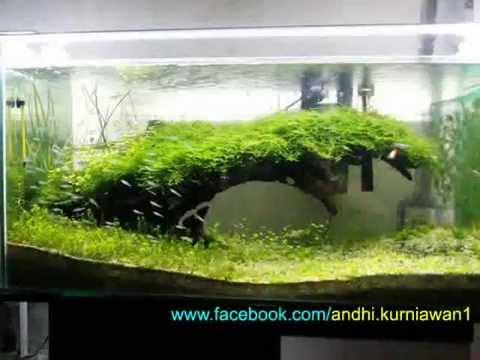 Natural aquascape indonesia youtube - Gambar aquascape ...