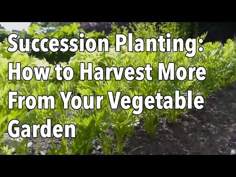 Succession Planting: How to Harvest More From Your Vegetable Garden