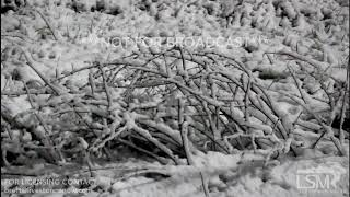 3-11-18 Elizabethtown, Kentucky - Snow Covered I-65 - Traffic - Weighted Trees