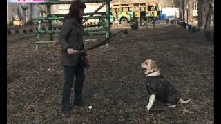 В Ярославле открылась еще одна площадка для выгула собак