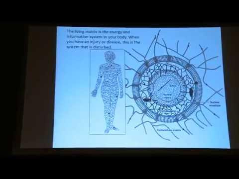 Electric Universe   Human metabolism Meets Cosmic Metabolism    James Oschman