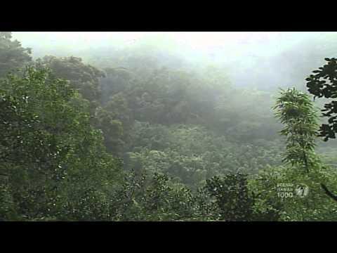 Rain Forests of Hawaii