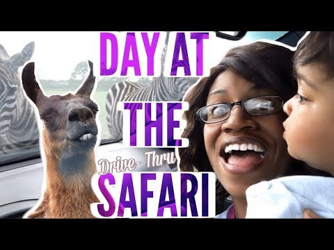 DRIVE THRU SAFARI | ZOO ANIMALS | TRAVEL DAY IN THE LIFE WITH TODDLER