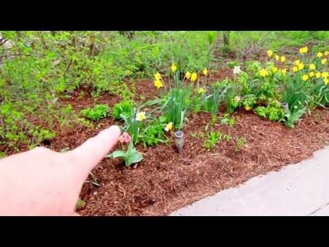 Early May Garden Tour 2018
