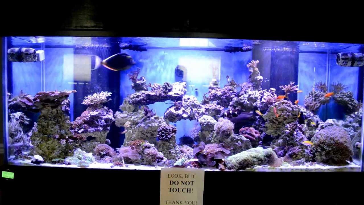 hydra led aquarium