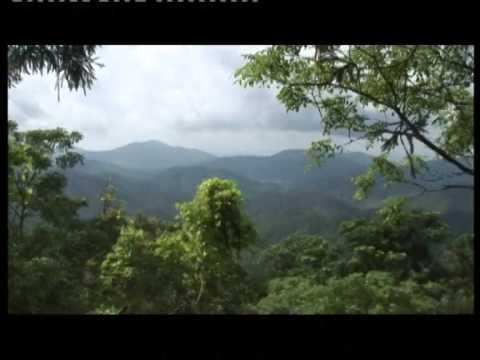 Côn Sơn Kiếp Bạc vùng đất tứ linh ngũ nhạc -Kênh TV Khám phá những chuyện lạ và vùng đất mới