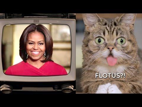 Thumbnail Lil BUB Meet The FLOTUS!