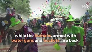 Elephant water battle heralds Thai new year festival