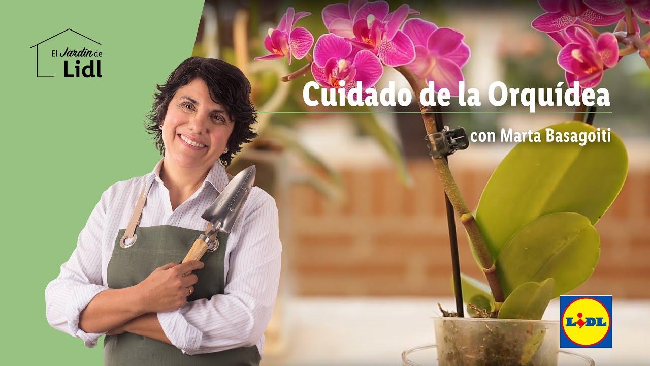 Cuidado de la orqu dea lidl jard n youtube for Cuidado de las orquideas moradas
